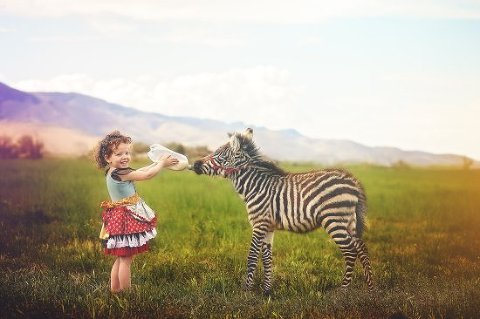Baby zebra photo session with Utah photographer Loni Smith